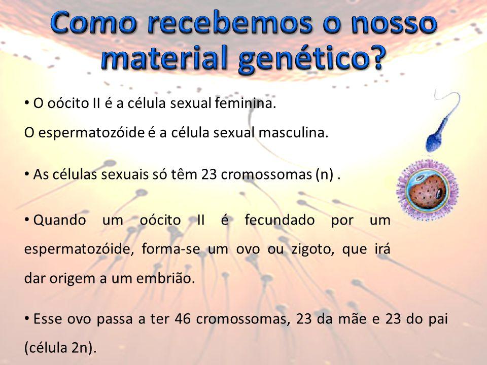 O oócito II é a célula sexual feminina.O espermatozóide é a célula sexual masculina.