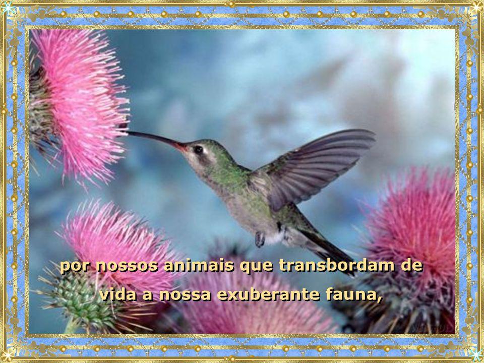 por nossos animais que transbordam de vida a nossa exuberante fauna, por nossos animais que transbordam de vida a nossa exuberante fauna,