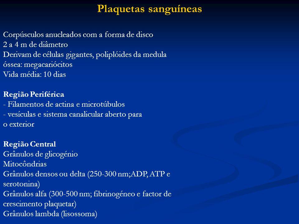 Plaquetas sanguíneas Corpúsculos anucleados com a forma de disco 2 a 4 m de diâmetro Derivam de células gigantes, poliplóides da medula óssea: megacar