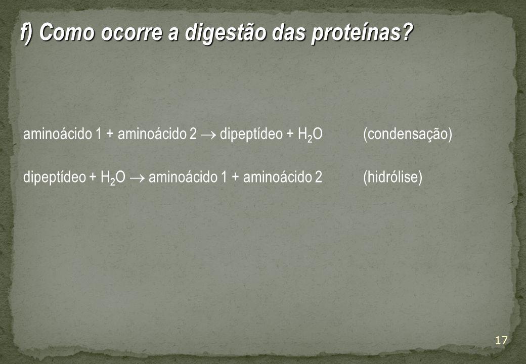 17 f) Como ocorre a digestão das proteínas.