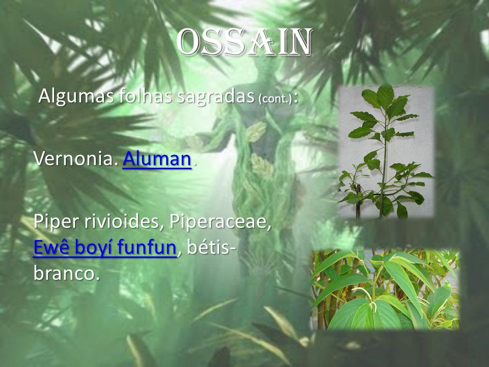 OSSAIN Algumas folhas sagradas (cont.) : Algumas folhas sagradas (cont.) : Vernonia. Aluman. Aluman Piper rivioides, Piperaceae, Ewê boyí funfun, béti