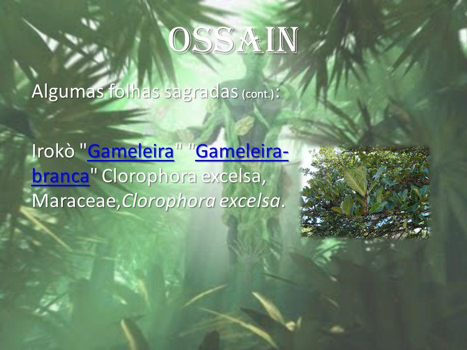 OSSAIN Algumas folhas sagradas (cont.) : Irokò