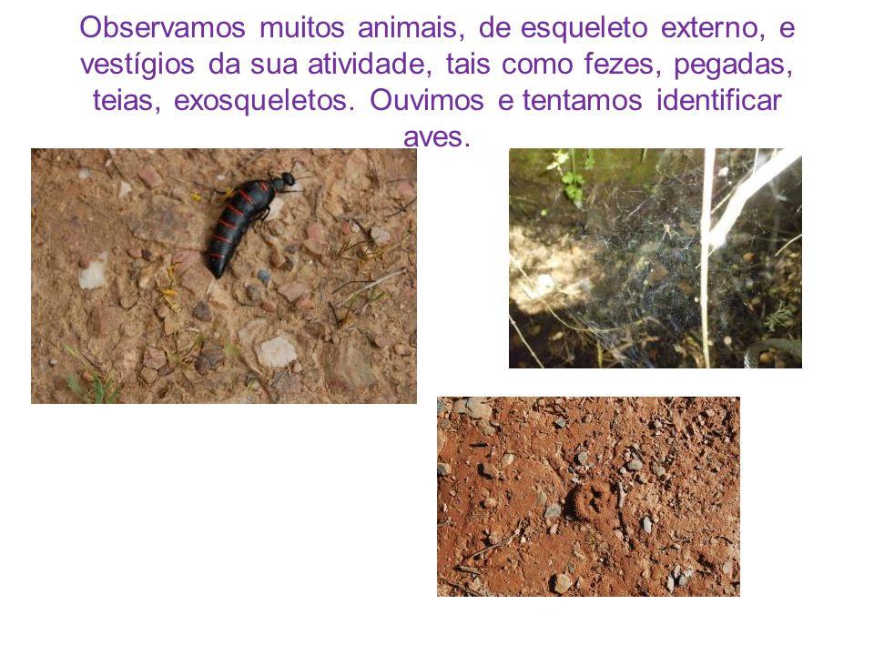 Observamos muitos animais, de esqueleto externo, e vestígios da sua atividade, tais como fezes, pegadas, teias, exosqueletos.
