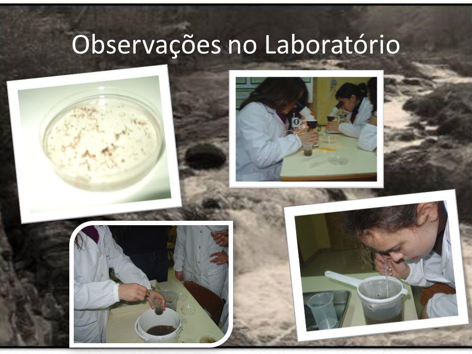 Observações no Laboratório