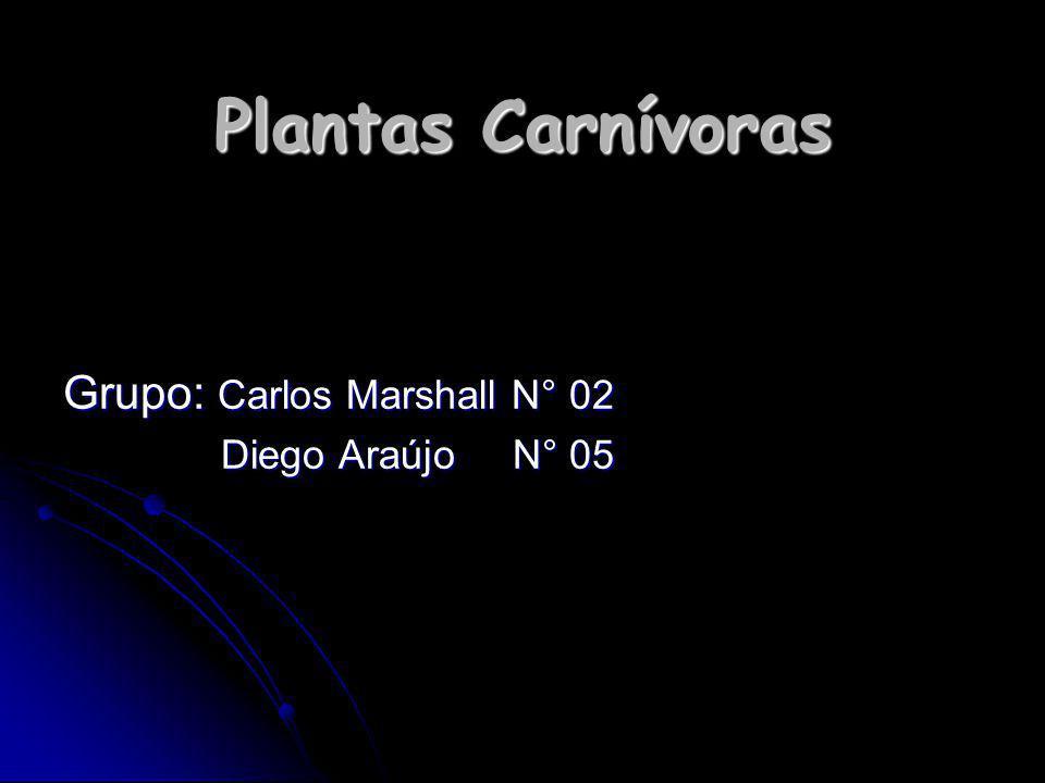Plantas Carnívoras Grupo: Carlos Marshall N° 02 Diego Araújo N° 05 Diego Araújo N° 05