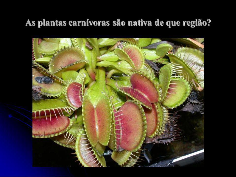 As plantas carnívoras são nativa de que região?