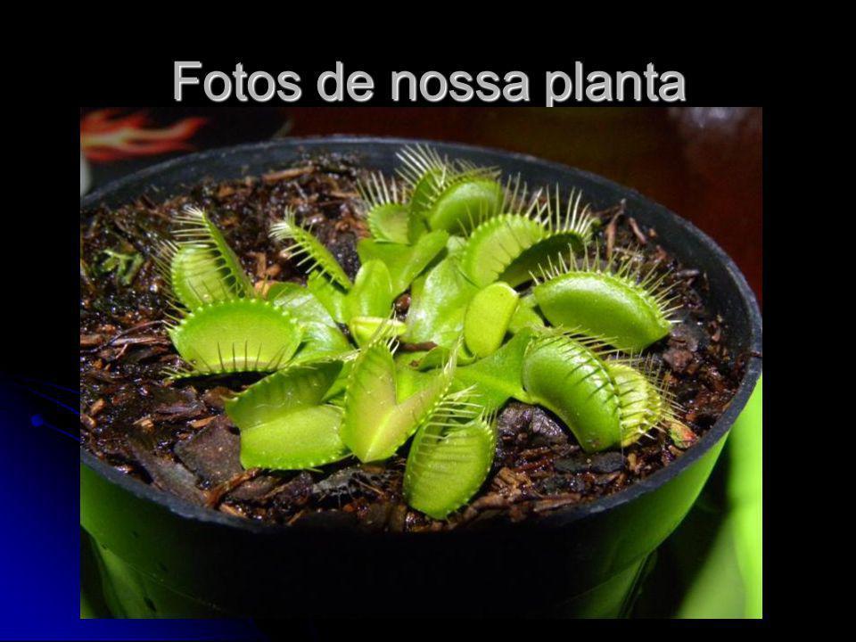 Fotos de nossa planta