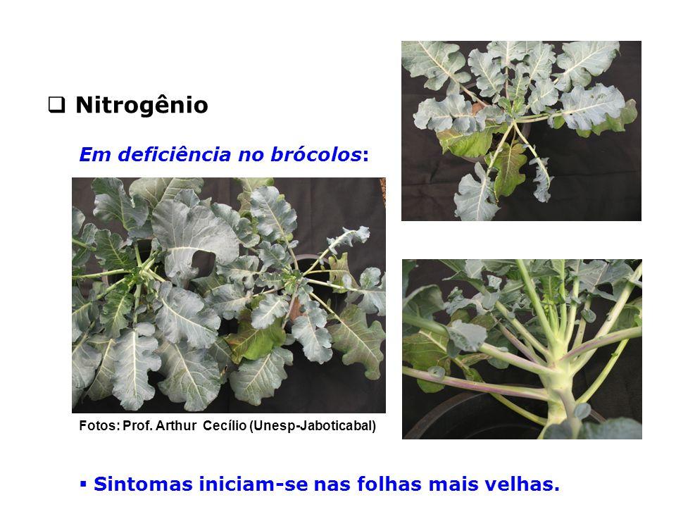  Sintomas iniciam-se nas folhas mais velhas.  Nitrogênio Em deficiência no brócolos: Fotos: Prof. Arthur Cecílio (Unesp-Jaboticabal)