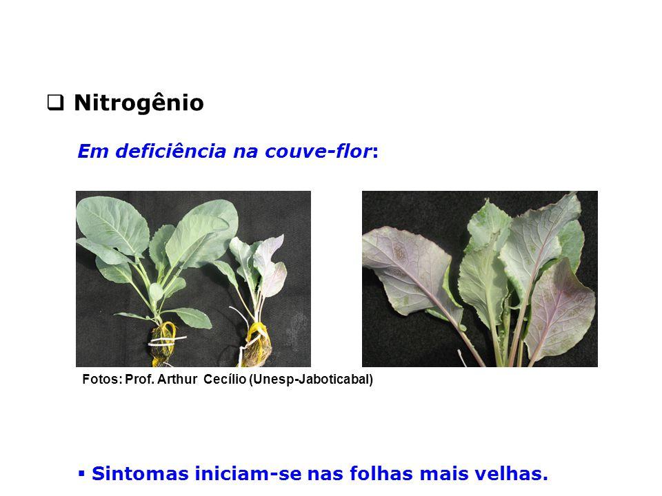  Sintomas iniciam-se nas folhas mais velhas.  Nitrogênio Em deficiência na couve-flor: Fotos: Prof. Arthur Cecílio (Unesp-Jaboticabal)