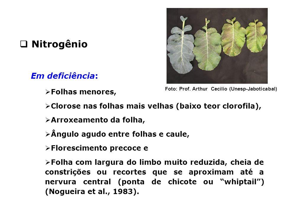 Em deficiência:  Folhas menores,  Clorose nas folhas mais velhas (baixo teor clorofila),  Arroxeamento da folha,  Ângulo agudo entre folhas e caul