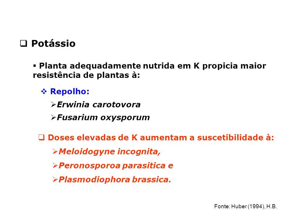  Planta adequadamente nutrida em K propicia maior resistência de plantas à:  Repolho:  Erwinia carotovora  Fusarium oxysporum  Doses elevadas de