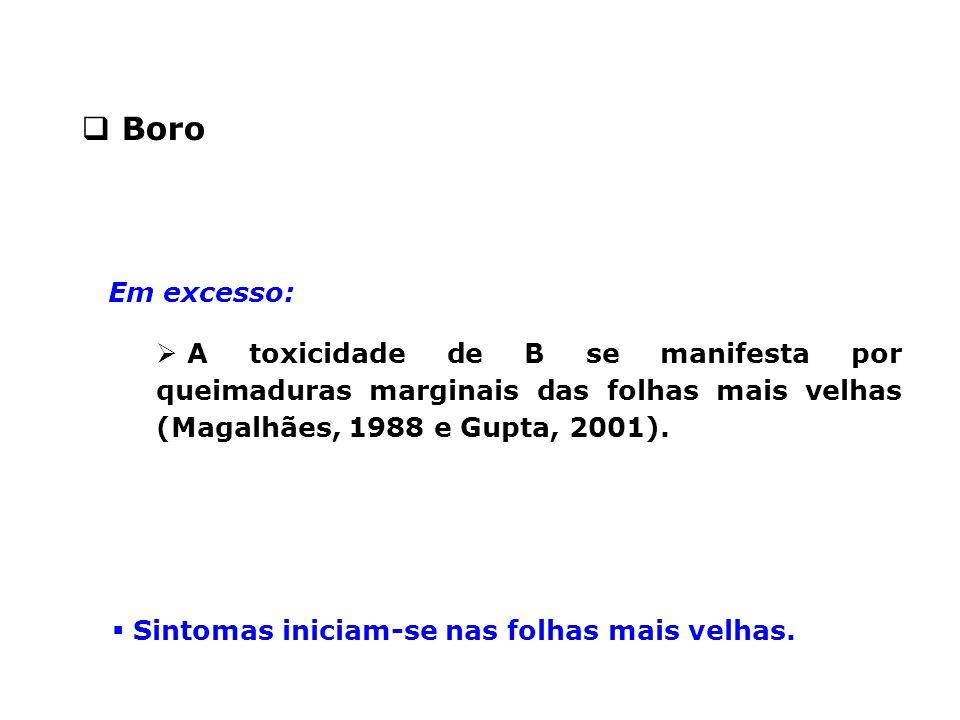 Em excesso:  A toxicidade de B se manifesta por queimaduras marginais das folhas mais velhas (Magalhães, 1988 e Gupta, 2001).  Boro  Sintomas inici