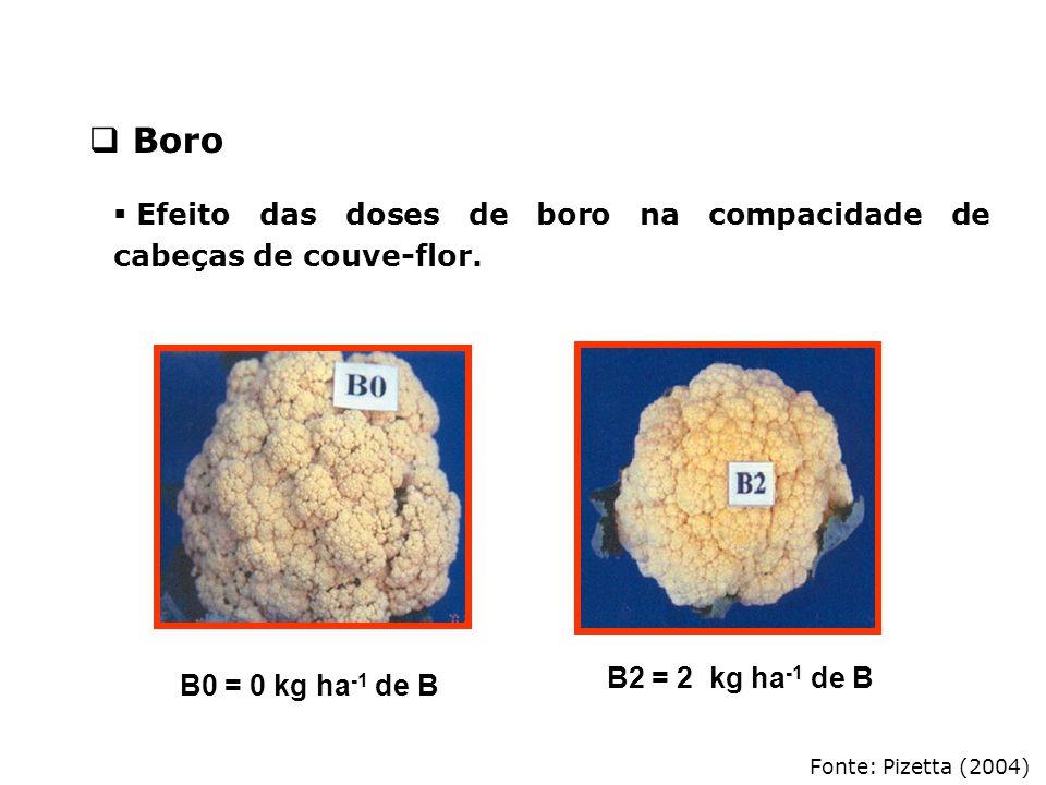 Fonte: Pizetta (2004)  Efeito das doses de boro na compacidade de cabeças de couve-flor. B0 = 0 kg ha -1 de B B2 = 2 kg ha -1 de B  Boro