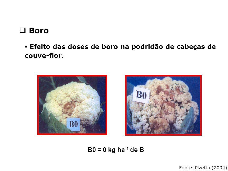 Fonte: Pizetta (2004)  Efeito das doses de boro na podridão de cabeças de couve-flor. B0 = 0 kg ha -1 de B  Boro