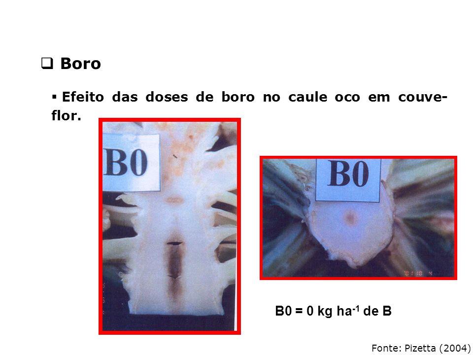 Fonte: Pizetta (2004)  Efeito das doses de boro no caule oco em couve- flor. B0 = 0 kg ha -1 de B  Boro