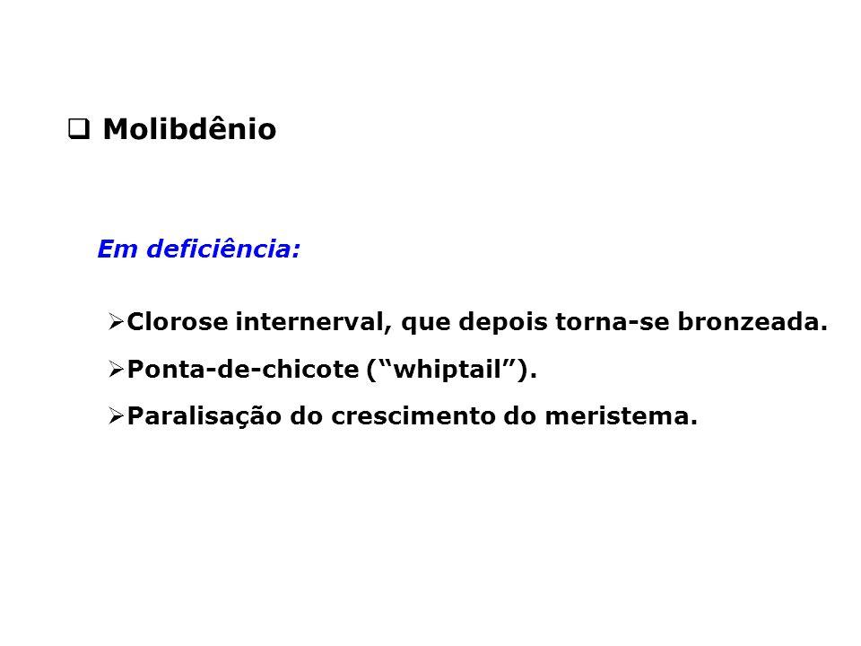 """ Molibdênio  Clorose internerval, que depois torna-se bronzeada.  Ponta-de-chicote (""""whiptail"""").  Paralisação do crescimento do meristema. Em defi"""