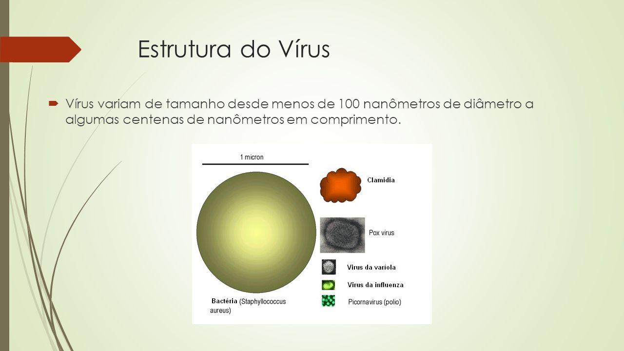 Estrutura do Vírus  Vírus variam de tamanho desde menos de 100 nanômetros de diâmetro a algumas centenas de nanômetros em comprimento.