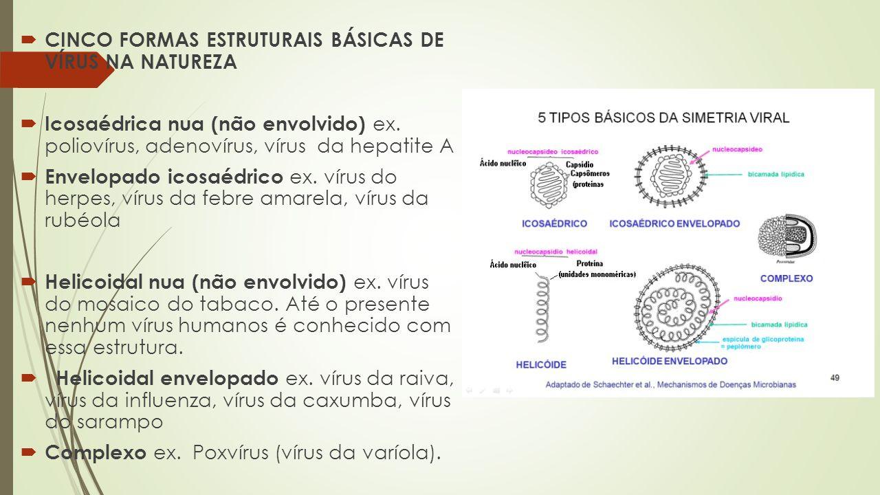  CINCO FORMAS ESTRUTURAIS BÁSICAS DE VÍRUS NA NATUREZA  Icosaédrica nua (não envolvido) ex. poliovírus, adenovírus, vírus da hepatite A  Envelopado