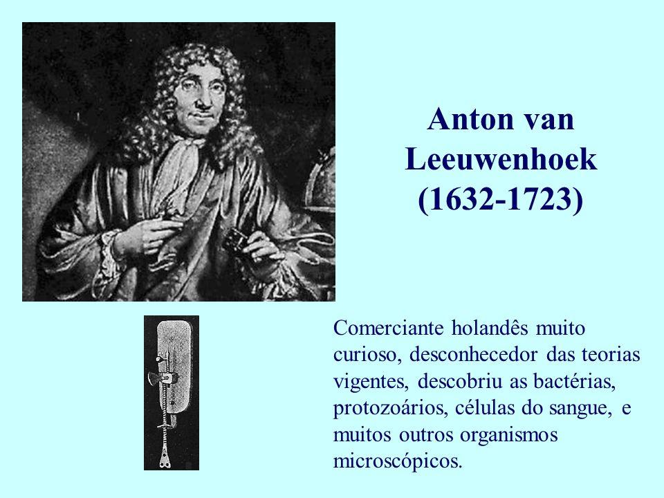 Anton van Leeuwenhoek (1632-1723) Comerciante holandês muito curioso, desconhecedor das teorias vigentes, descobriu as bactérias, protozoários, célula