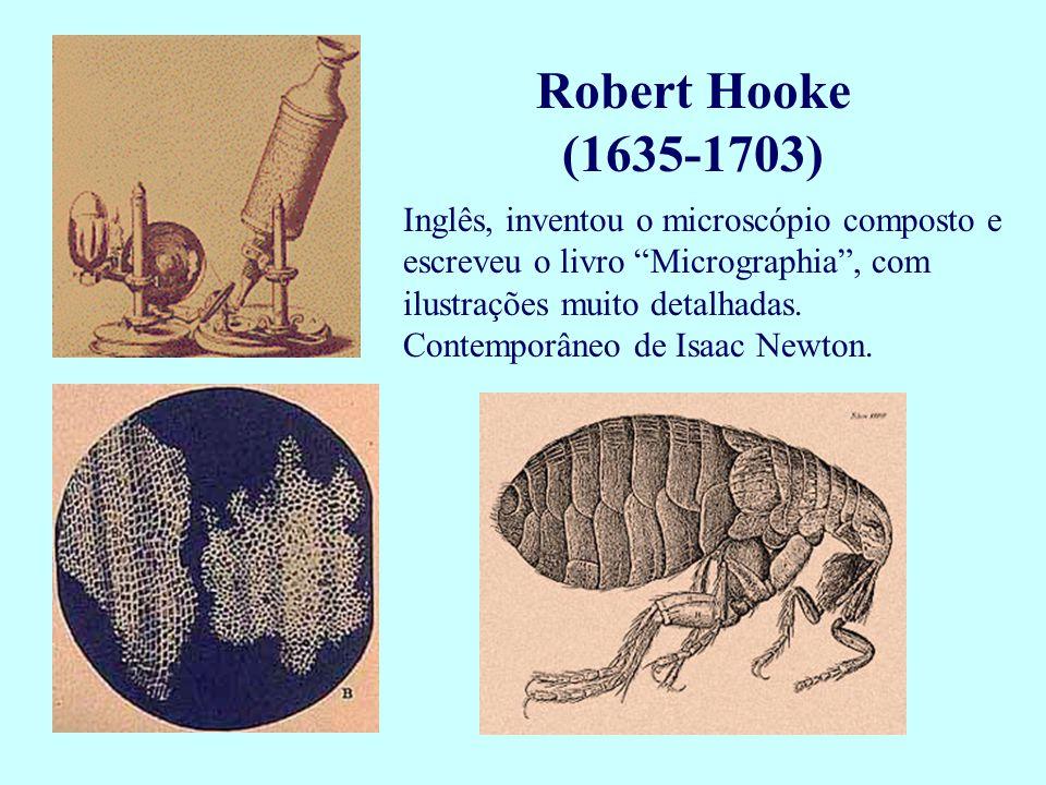"""Robert Hooke (1635-1703) Inglês, inventou o microscópio composto e escreveu o livro """"Micrographia"""", com ilustrações muito detalhadas. Contemporâneo de"""
