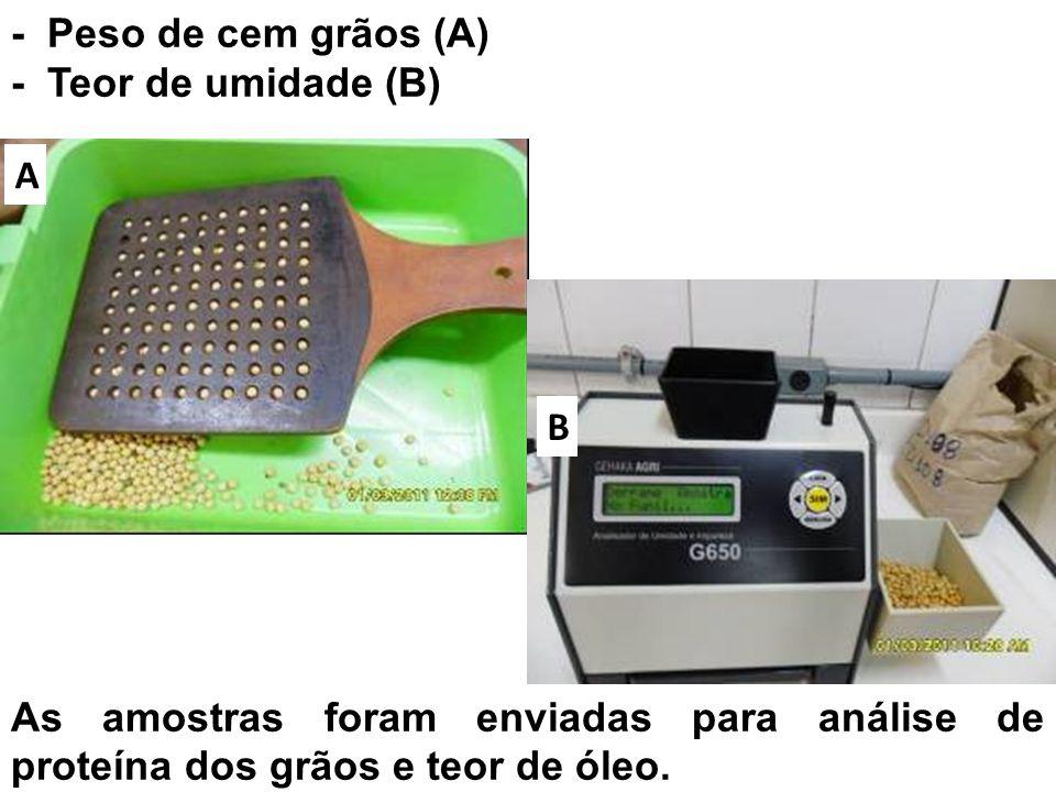 - Peso de cem grãos (A) - Teor de umidade (B) A B As amostras foram enviadas para análise de proteína dos grãos e teor de óleo.