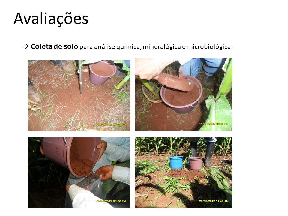 Avaliações  Coleta de solo para análise química, mineralógica e microbiológica: