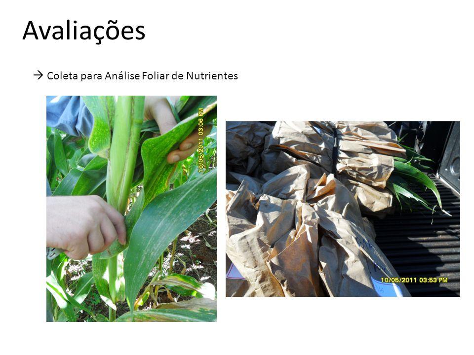 Avaliações  Coleta para Análise Foliar de Nutrientes