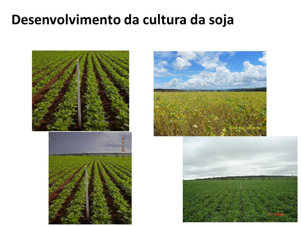 Desenvolvimento da cultura da soja