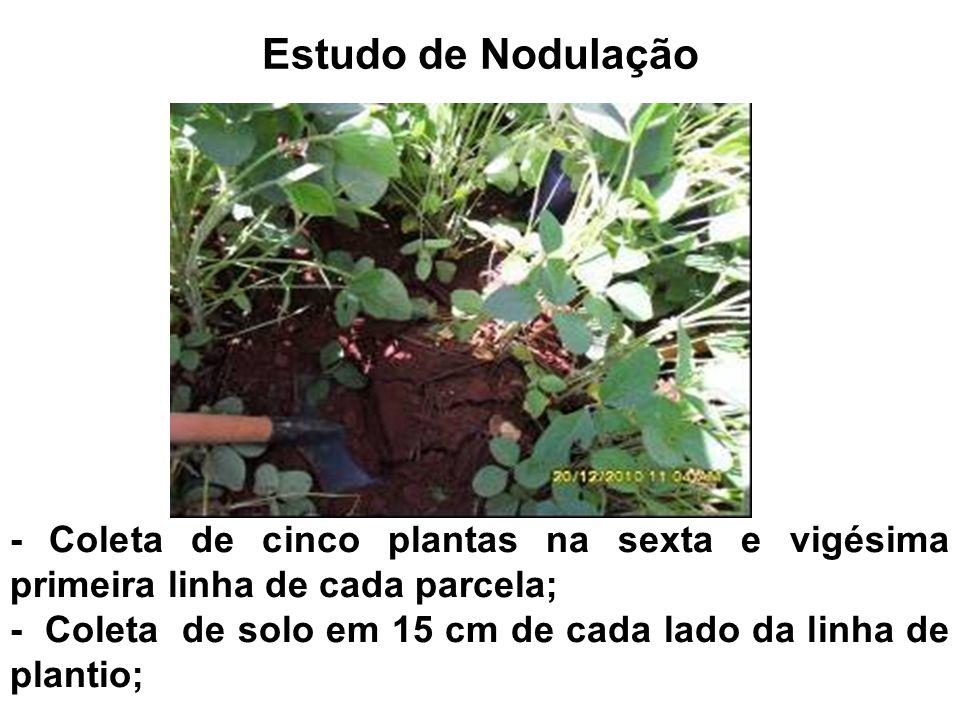 Estudo de Nodulação - Coleta de cinco plantas na sexta e vigésima primeira linha de cada parcela; - Coleta de solo em 15 cm de cada lado da linha de p