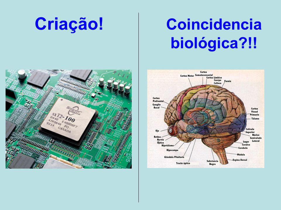 Dizemos que isto é criação! E seria isto apenas coincidencia biológica !!