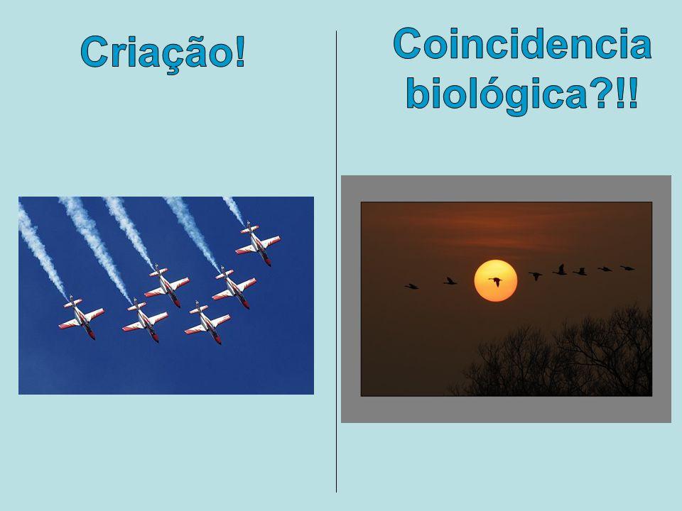 Criação! Coincidencia biológica?!!