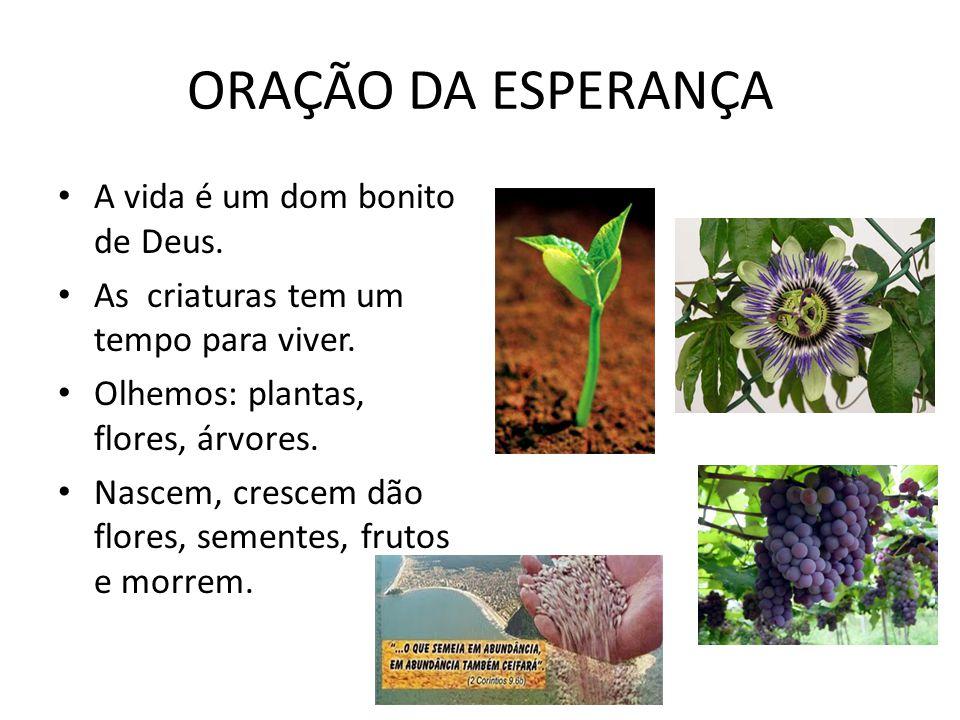 ORAÇÃO DA ESPERANÇA A vida é um dom bonito de Deus. As criaturas tem um tempo para viver. Olhemos: plantas, flores, árvores. Nascem, crescem dão flore