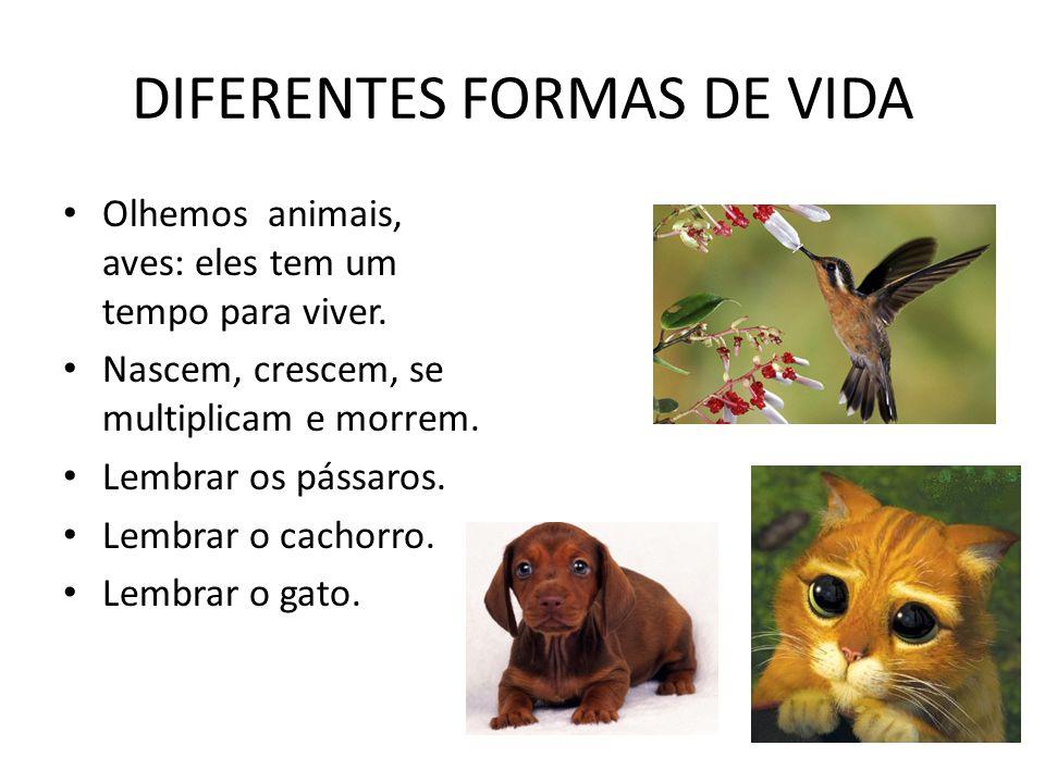 DIFERENTES FORMAS DE VIDA Olhemos animais, aves: eles tem um tempo para viver. Nascem, crescem, se multiplicam e morrem. Lembrar os pássaros. Lembrar