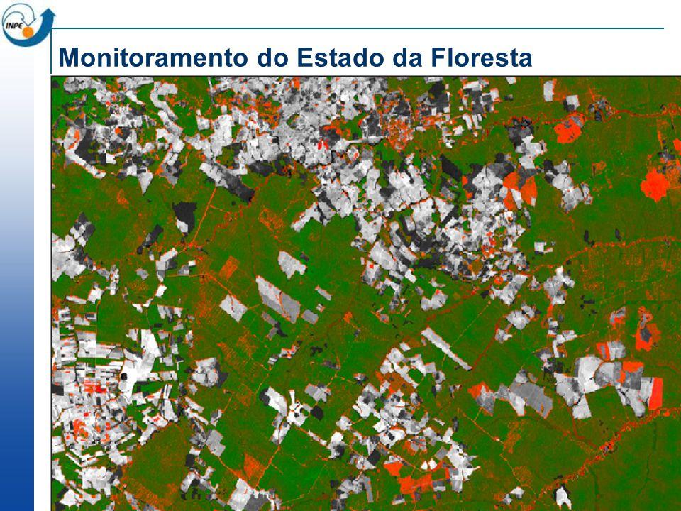 Monitoramento do Estado da Floresta