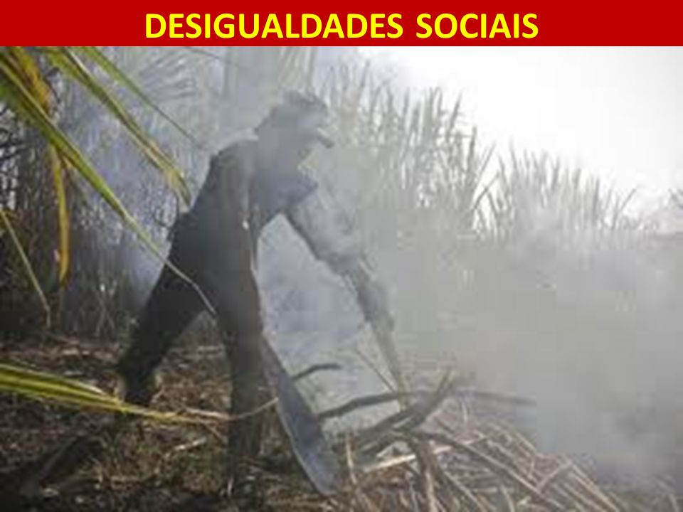 DESIGUALDADES SOCIAIS 13