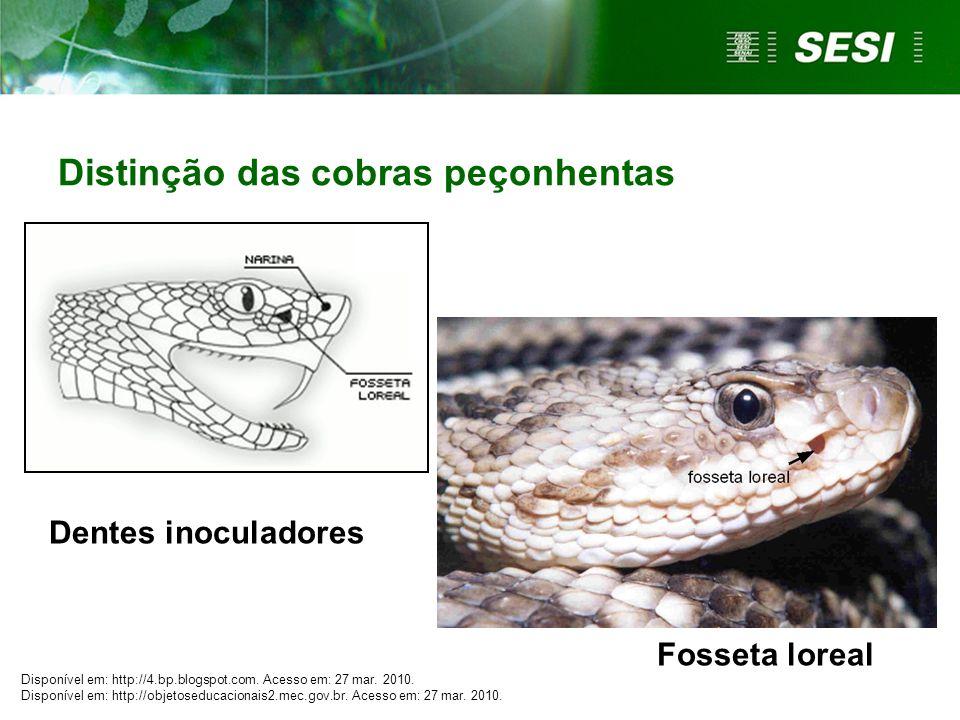 Fosseta loreal Dentes inoculadores Distinção das cobras peçonhentas Disponível em: http://4.bp.blogspot.com.