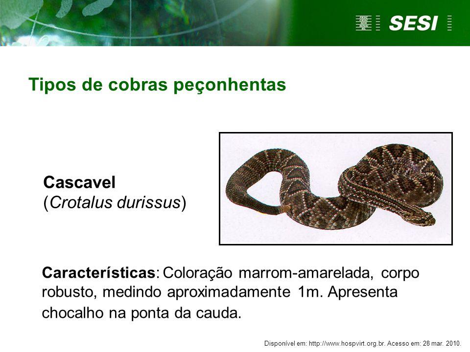 Cascavel (Crotalus durissus) Características: Coloração marrom-amarelada, corpo robusto, medindo aproximadamente 1m. Apresenta chocalho na ponta da ca