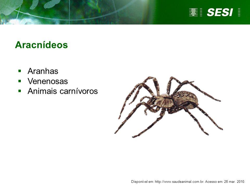 Aracnídeos  Aranhas  Venenosas  Animais carnívoros Disponível em: http://www.saudeanimal.com.br. Acesso em: 28 mar. 2010.