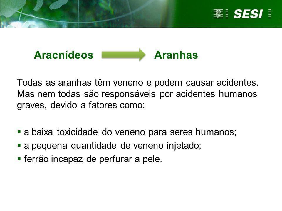 Aracnídeos Aranhas Todas as aranhas têm veneno e podem causar acidentes.