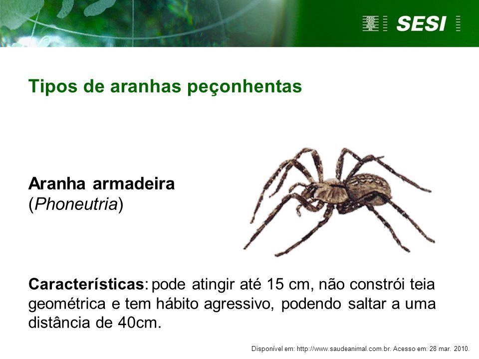 Aranha armadeira (Phoneutria) Características: pode atingir até 15 cm, não constrói teia geométrica e tem hábito agressivo, podendo saltar a uma distâ