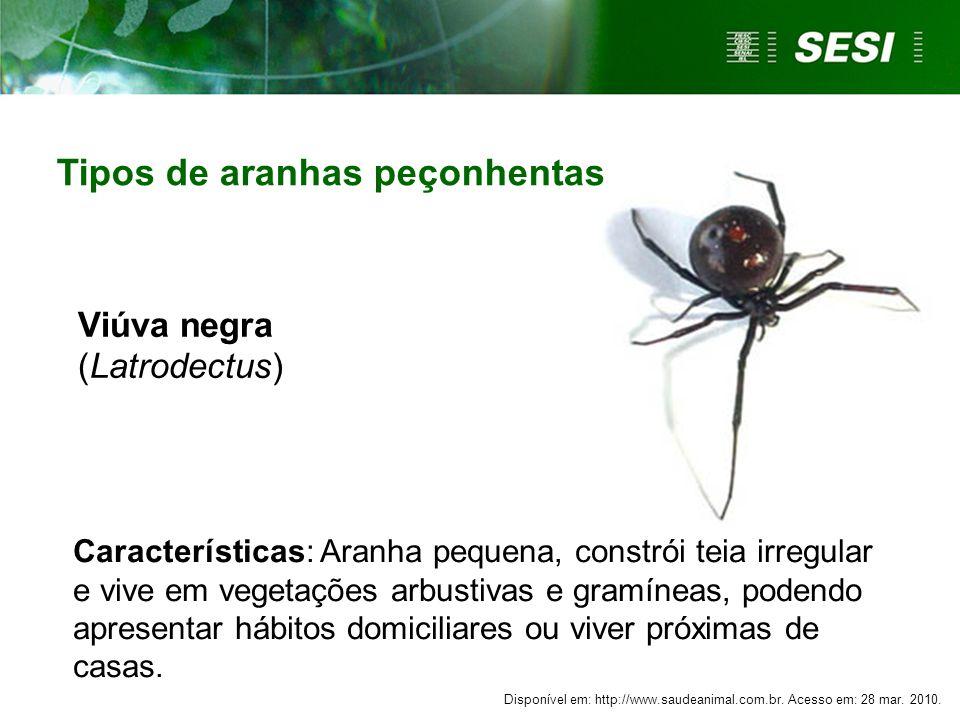 Características: Aranha pequena, constrói teia irregular e vive em vegetações arbustivas e gramíneas, podendo apresentar hábitos domiciliares ou viver