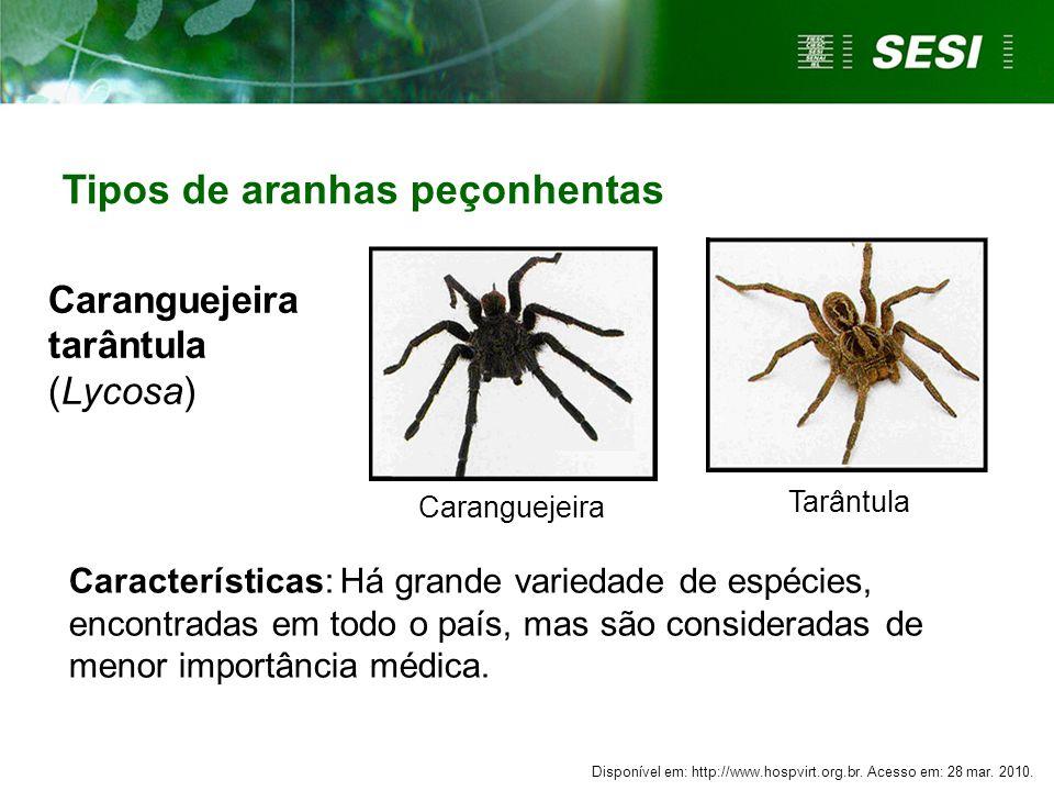 Caranguejeira Tarântula Caranguejeira tarântula (Lycosa) Características: Há grande variedade de espécies, encontradas em todo o país, mas são consideradas de menor importância médica.