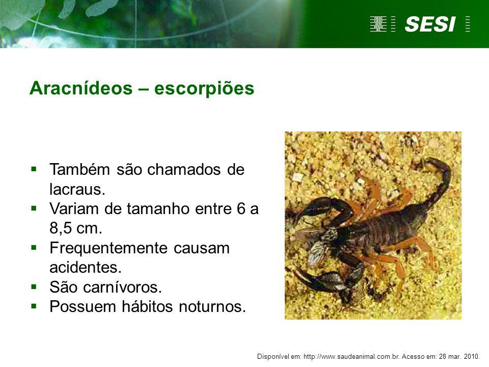 Aracnídeos – escorpiões  Também são chamados de lacraus.  Variam de tamanho entre 6 a 8,5 cm.  Frequentemente causam acidentes.  São carnívoros. 