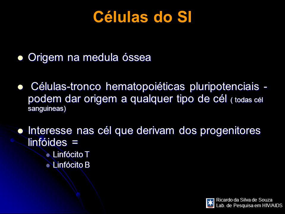 Ricardo da Silva de Souza Lab. de Pesquisa em HIV/AIDS Células do SI Origem na medula óssea Origem na medula óssea Células-tronco hematopoiéticas plur