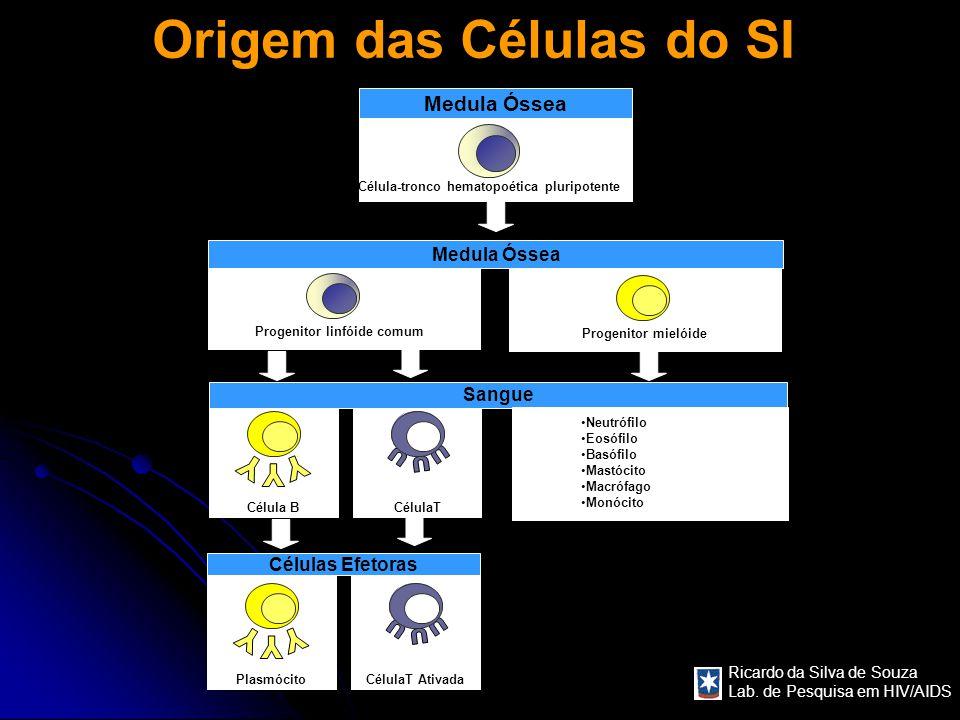 Ricardo da Silva de Souza Lab. de Pesquisa em HIV/AIDS Origem das Células do SI Medula Óssea Célula-tronco hematopoética pluripotente Progenitor linfó