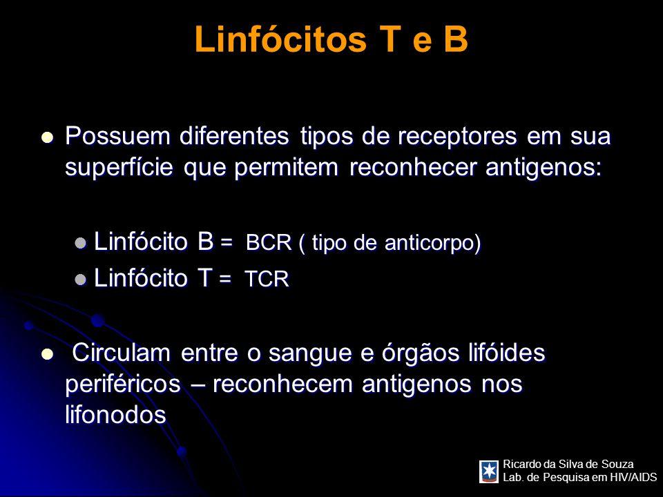 Ricardo da Silva de Souza Lab. de Pesquisa em HIV/AIDS Linfócitos T e B Possuem diferentes tipos de receptores em sua superfície que permitem reconhec