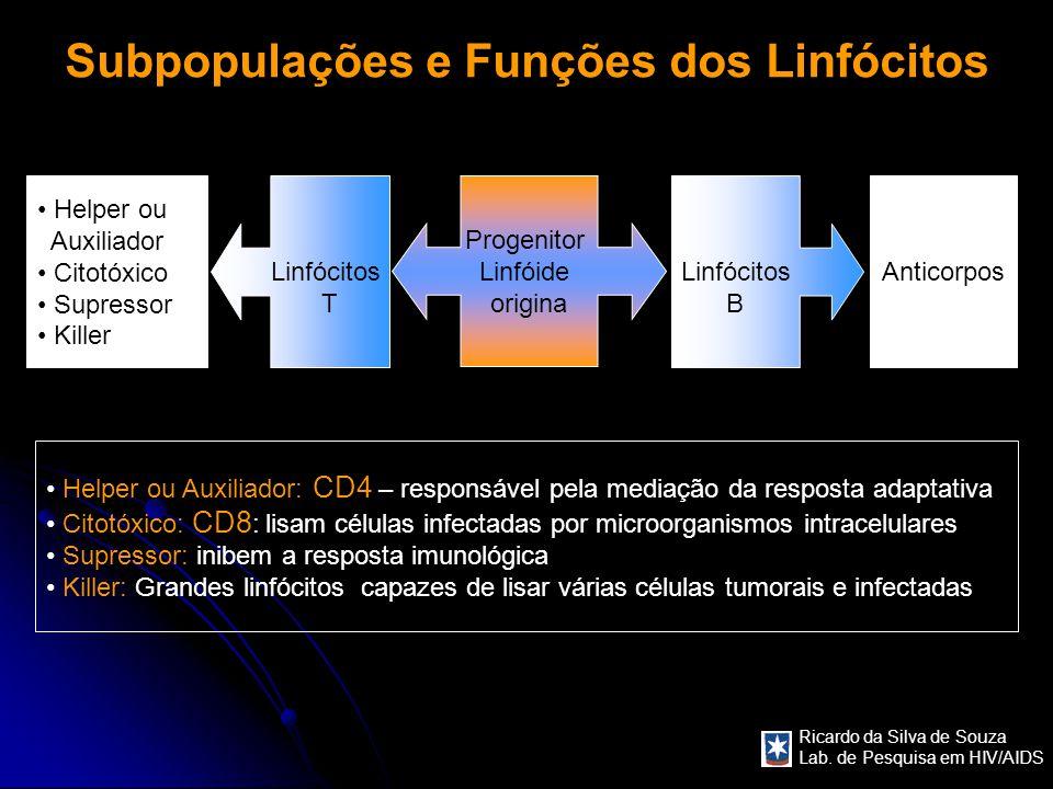 Ricardo da Silva de Souza Lab. de Pesquisa em HIV/AIDS Subpopulações e Funções dos Linfócitos Progenitor Linfóide origina Linfócitos T Linfócitos B He
