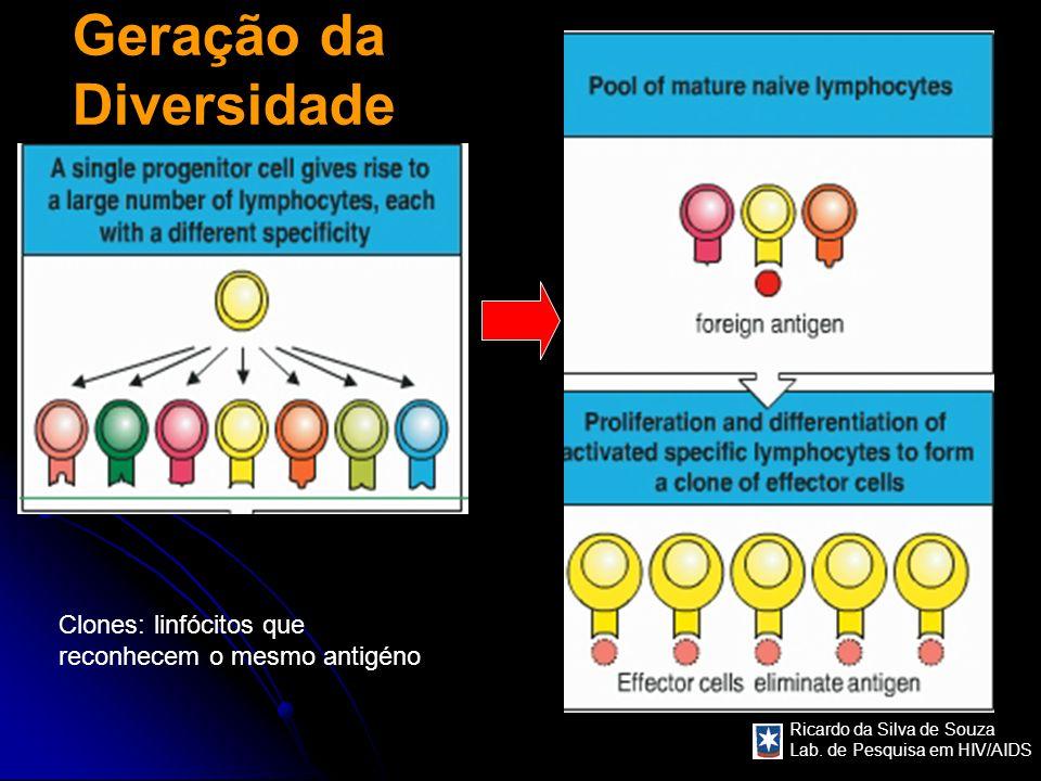 Ricardo da Silva de Souza Lab. de Pesquisa em HIV/AIDS Geração da Diversidade Clones: linfócitos que reconhecem o mesmo antigéno