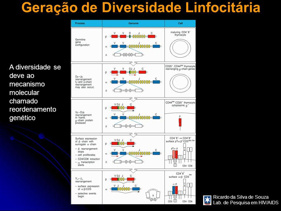 Ricardo da Silva de Souza Lab. de Pesquisa em HIV/AIDS Geração de Diversidade Linfocitária A diversidade se deve ao mecanismo molecular chamado reorde
