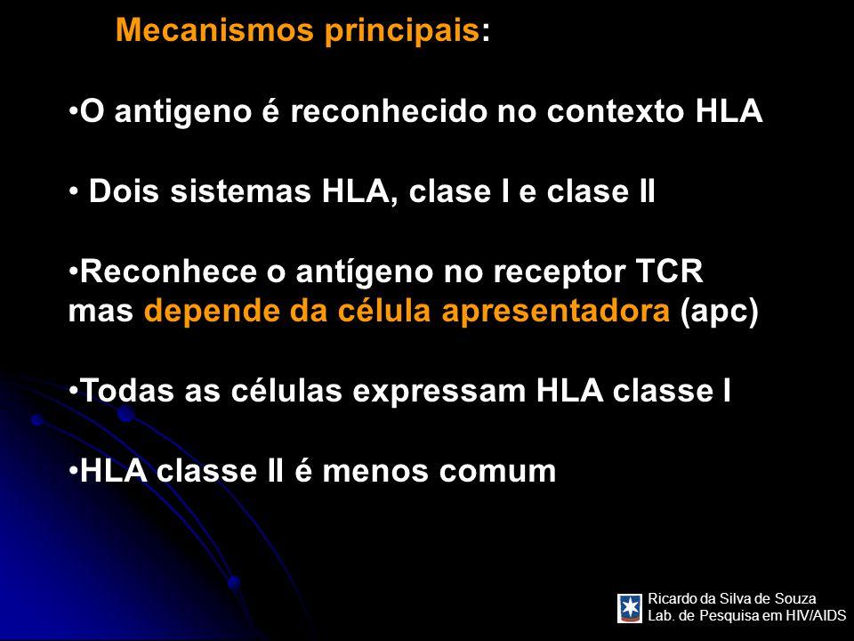 Ricardo da Silva de Souza Lab. de Pesquisa em HIV/AIDS Mecanismos principais: O antigeno é reconhecido no contexto HLA Dois sistemas HLA, clase I e cl